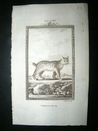 Buffon: 1785 Candian Lynx, Antique Print